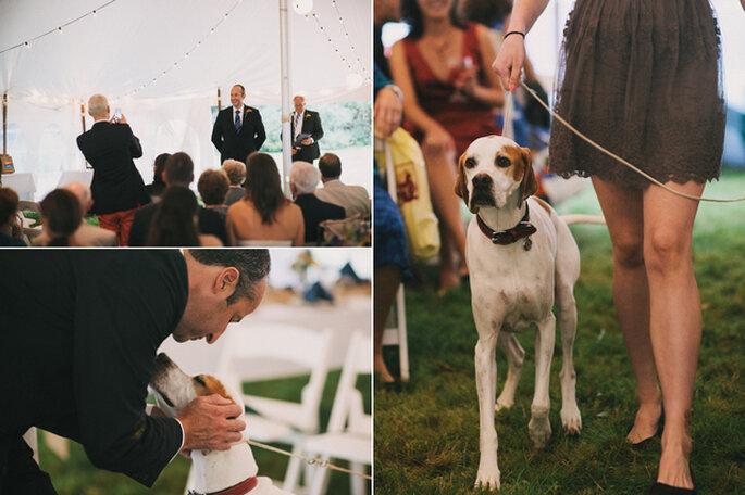 La mascotte peut faire partie du cortège de votre mariage - Photo: Alexandra Roberts Wedding Photograph