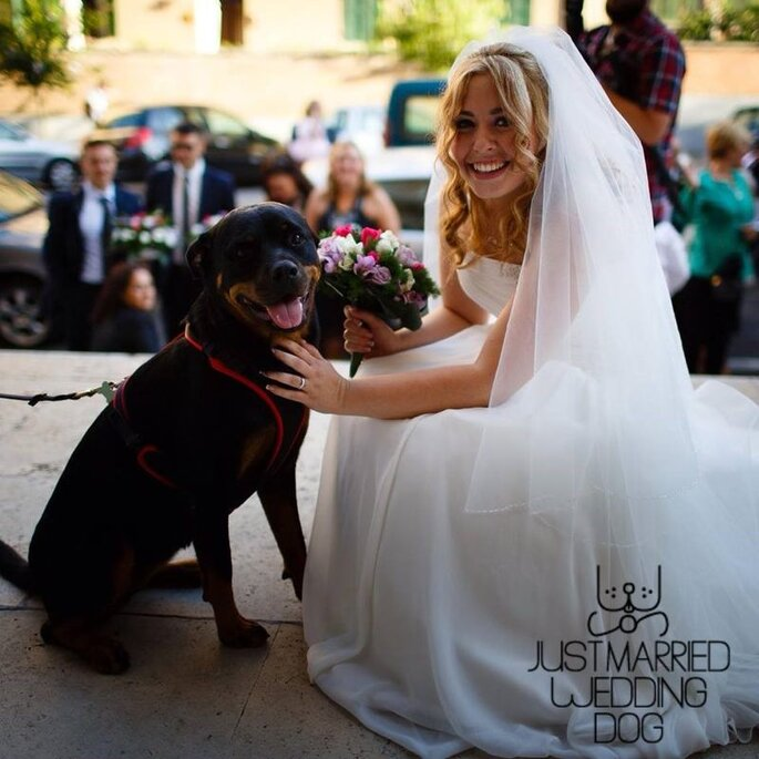 Just Married Wedding Dog