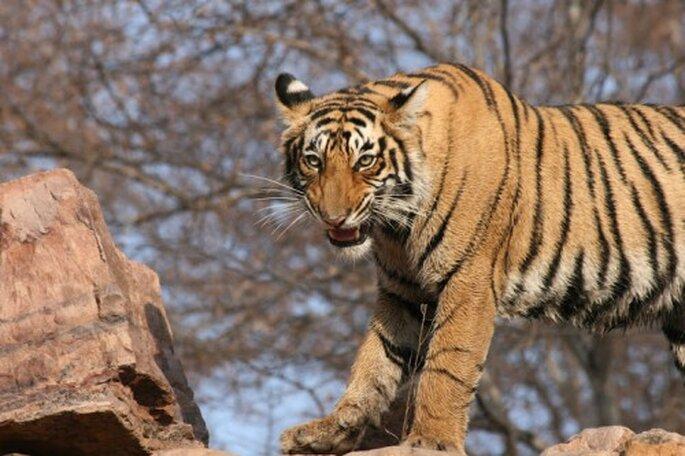 Naturliebhaber kommen in Indien voll und ganz auf Ihre Kosten. Foto: Enchanting Travel