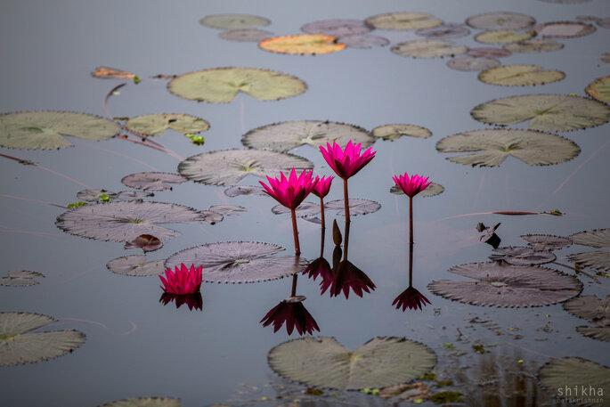 Photo: Shikha Balakrishnan Photography.