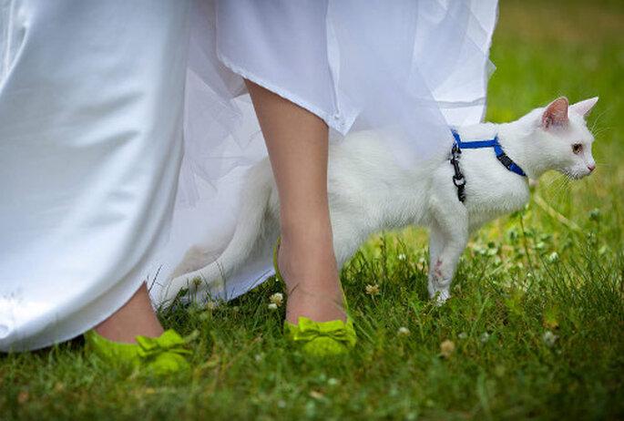 sesja ślubna z kotem