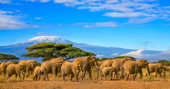 Flitterwochen in Tansania