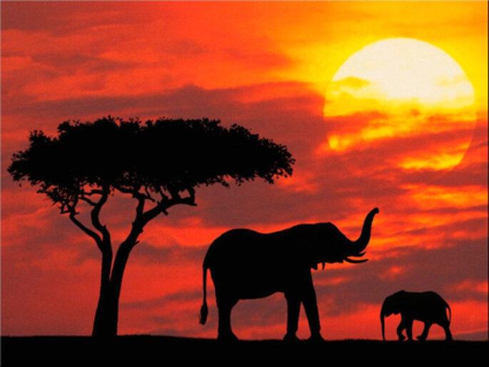 Kenia mía: impactante atardecer en tierras keniatas. El sol tiñe de un increíble color naranja el cielo con un árbol y dos elefantes como únicos testigos de la belleza de la naturaleza.