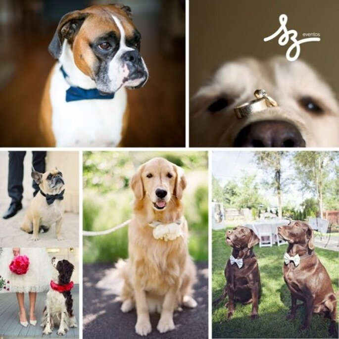 Collage para una boda en compañía de tus mascotas - Fotos: dog-milk.com, rachelevents.com, alexatiliberty.files.wordpress.com, weddbook.com - Diseño de Raisa Torres para SZ Eventos