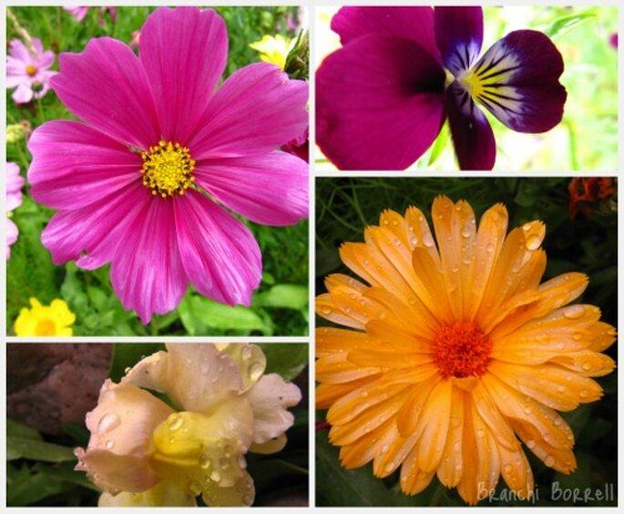 Flores Bariloche - Fotos: Branchi Borrell