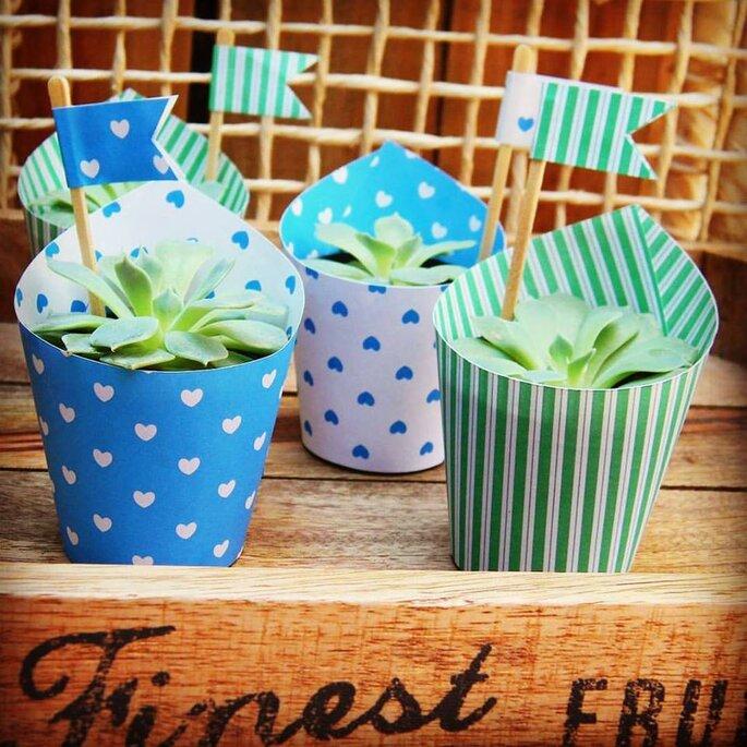 vasos decorados com suculentas