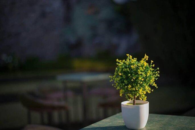 Quinta de Flores