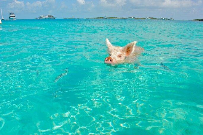 Photo : Sttaniel Cay pour Pixabay