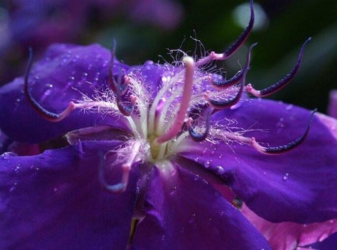 Flor de color violeta da tranquilidad. Foto: Zahira
