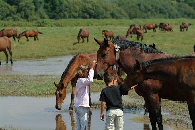 cavalos (86)