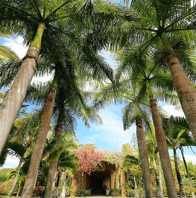 Le Mauricia. Foto: BeachComber