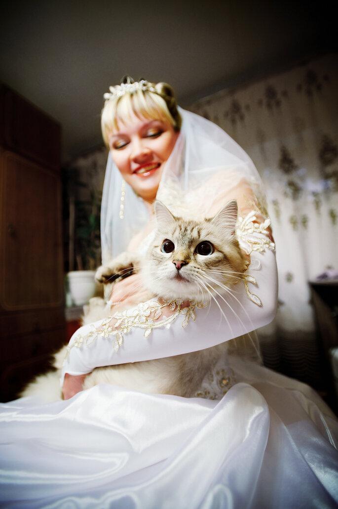 Und wie signalisiert die Katze das Ja-Wort? Foto: Shutterstock