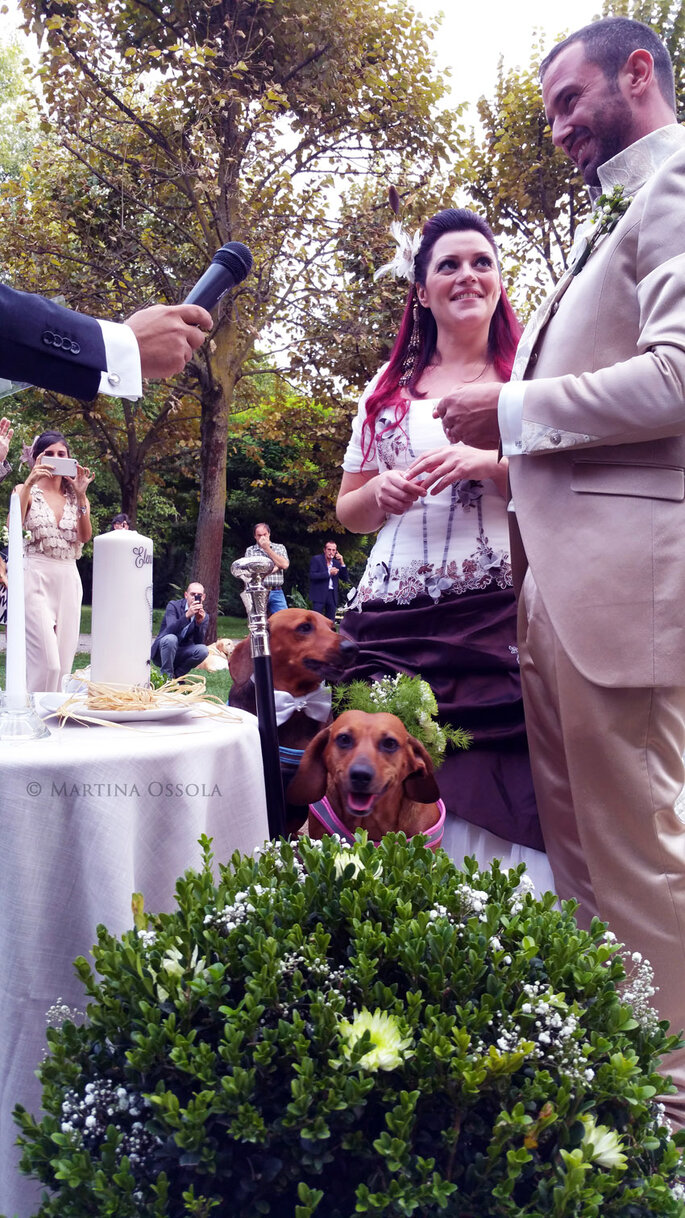 Wedding dog sitter Varese