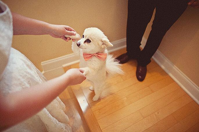 La compañía de los animales en una ceremonia de bodas es complicada. Foto de One Love Photo