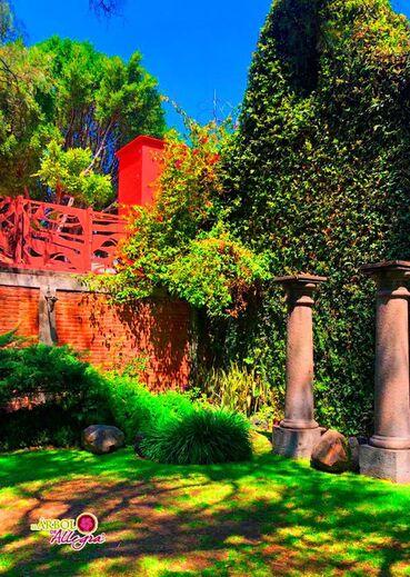 El Árbol de Allegra