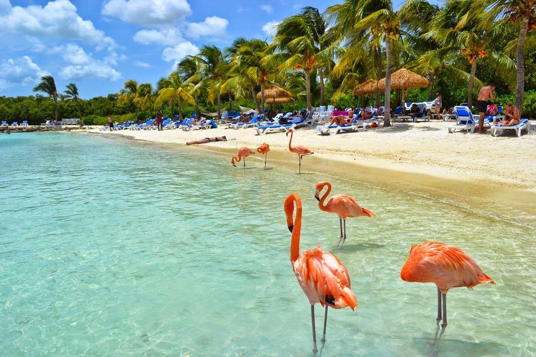 Nueva York - Aruba 09 días . Precio por persona desde 1885€ . Solicita más informacion.