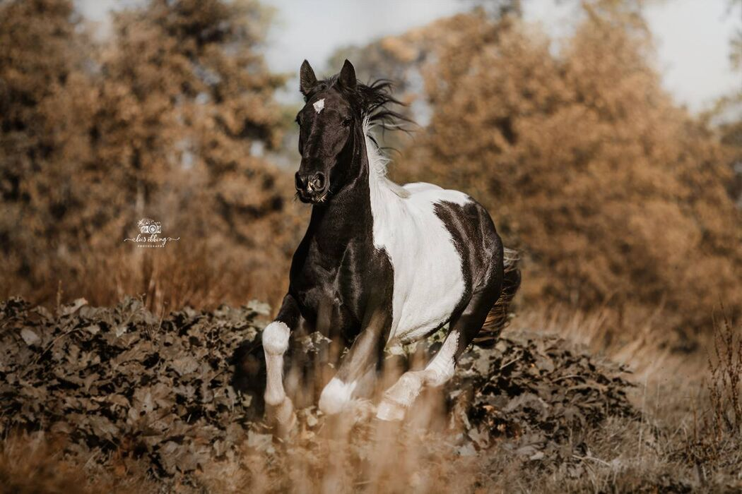 Loïs Ebbing Photography