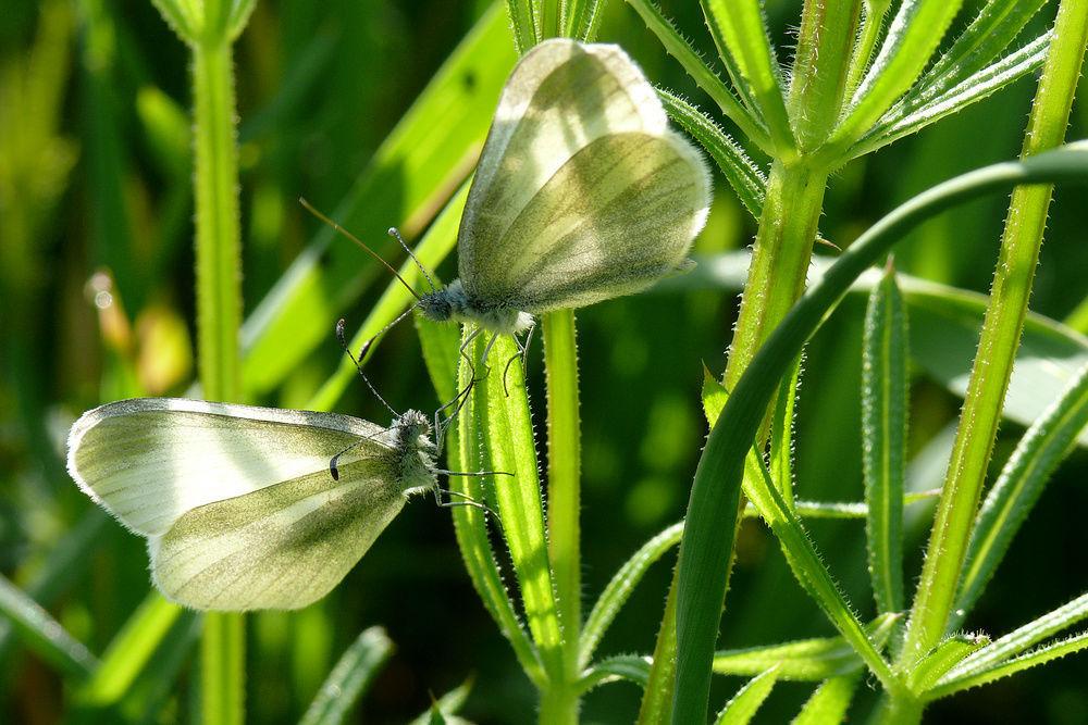 Beispiel: Artgerechtes Freilassen, Foto: Schmetterlingszauber.