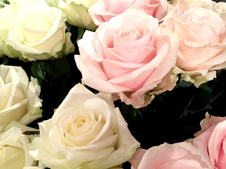 Audace Florale
