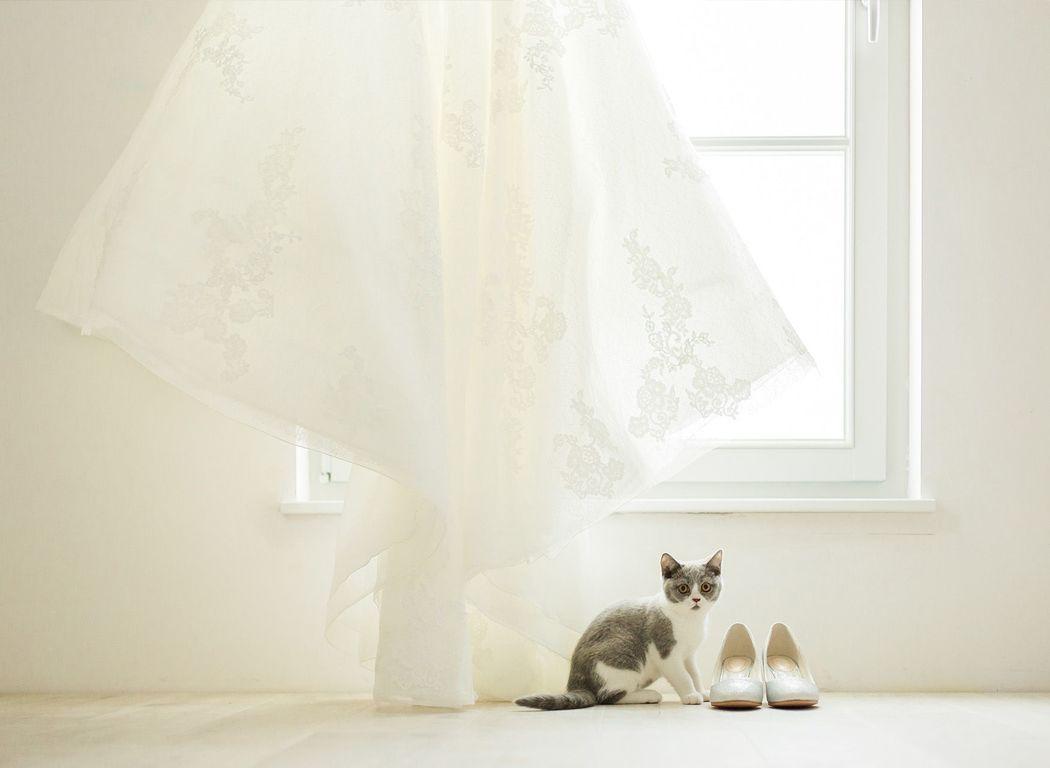 Elisabeth van Lent Photography