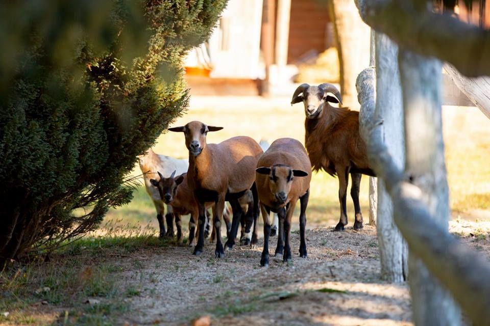 Quinta da Cepêda