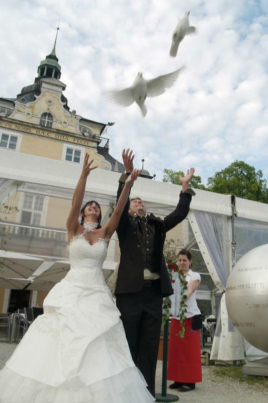 Beispiel: Tauben, Foto: SagJa.
