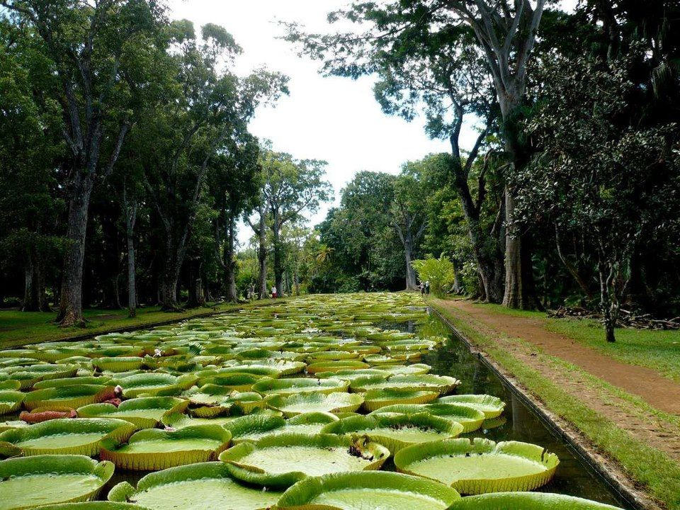 Jardin de Pamplemousse - île Maurice