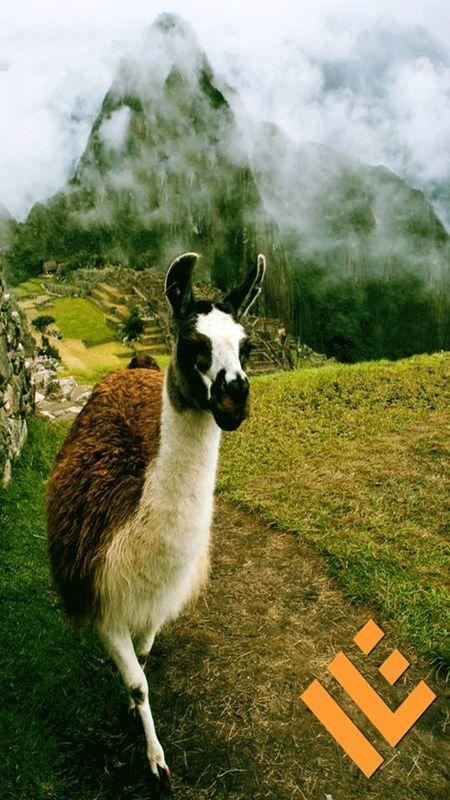 Inka Lands Expedition