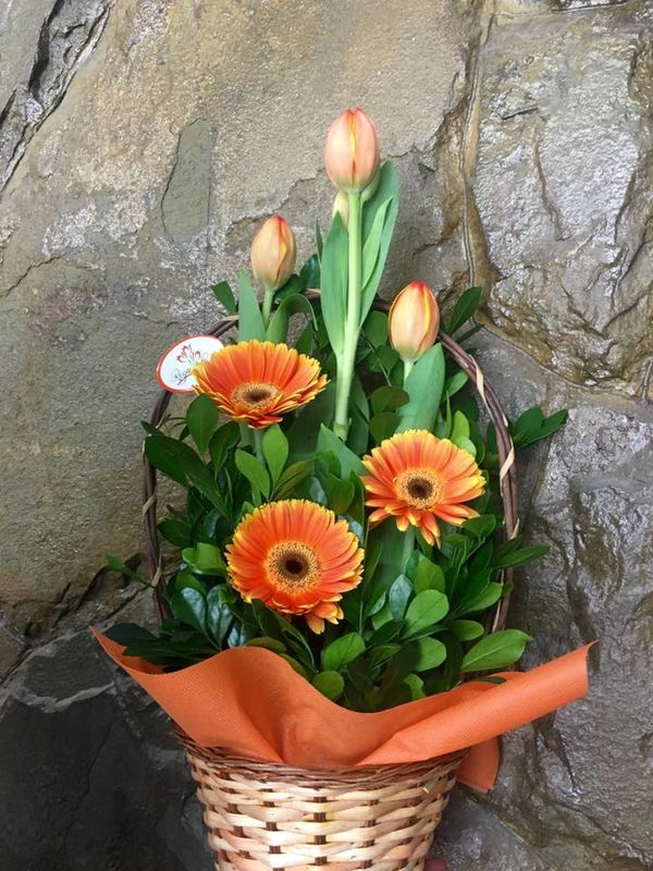 Rega Lazos Florería