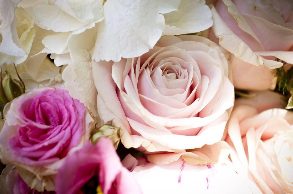 Rosa Confetto