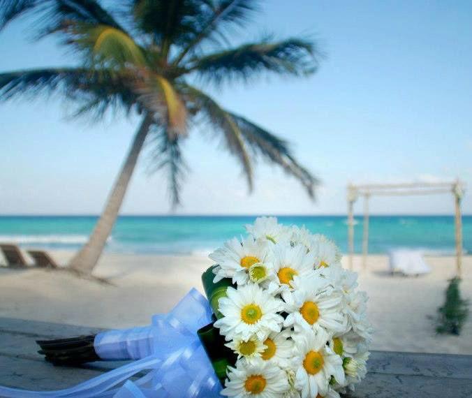 Wedding Specialists by Organiza