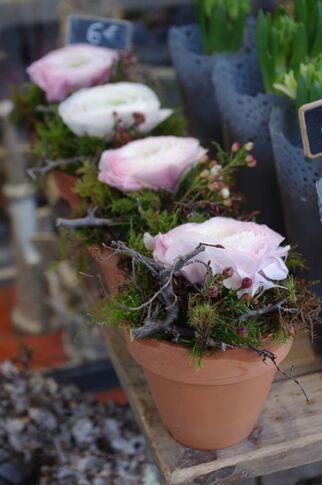 Camaïeu Fleurs