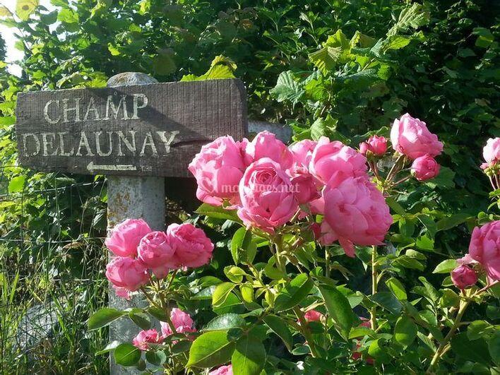 Champ Delaunay