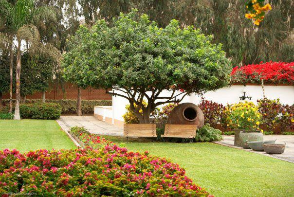 Hacienda Los Ficus