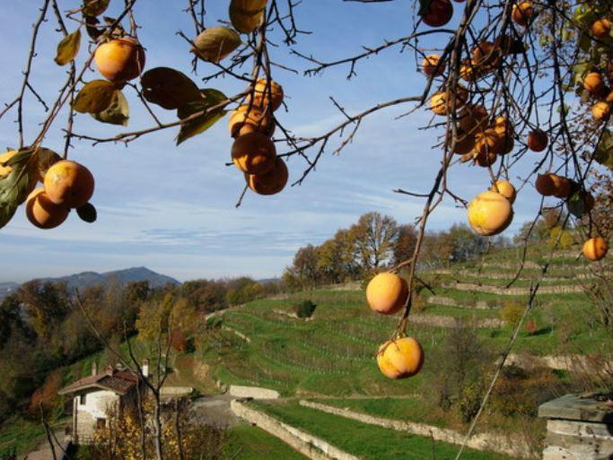 Agriturismo Le Sorgenti