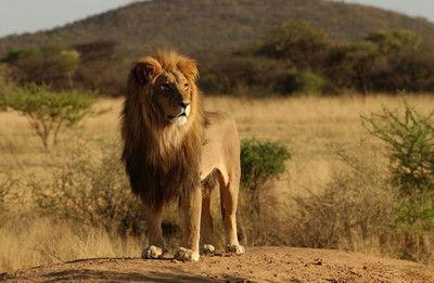 Serengeti, Ngorongoro... Tanzania te espera - brujulaviajes.com