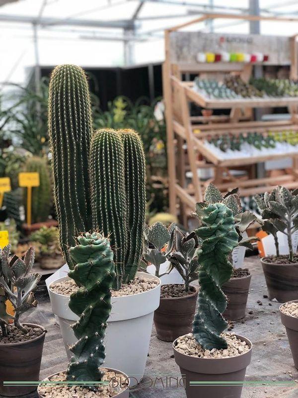 Blooming GardenCenter