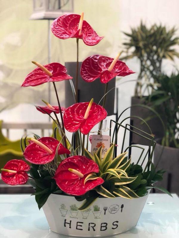 Arango Flowers