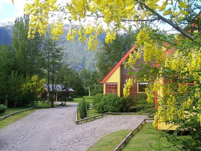 Patagonia Green