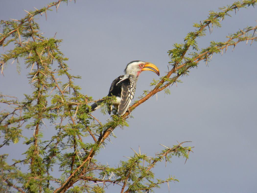Sudafrica safari