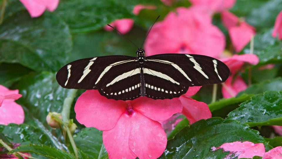 Mariposas La Trinidad Medellín