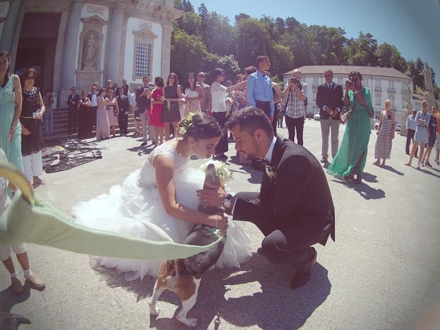 SóAnimarte - Wedding Dogsitter