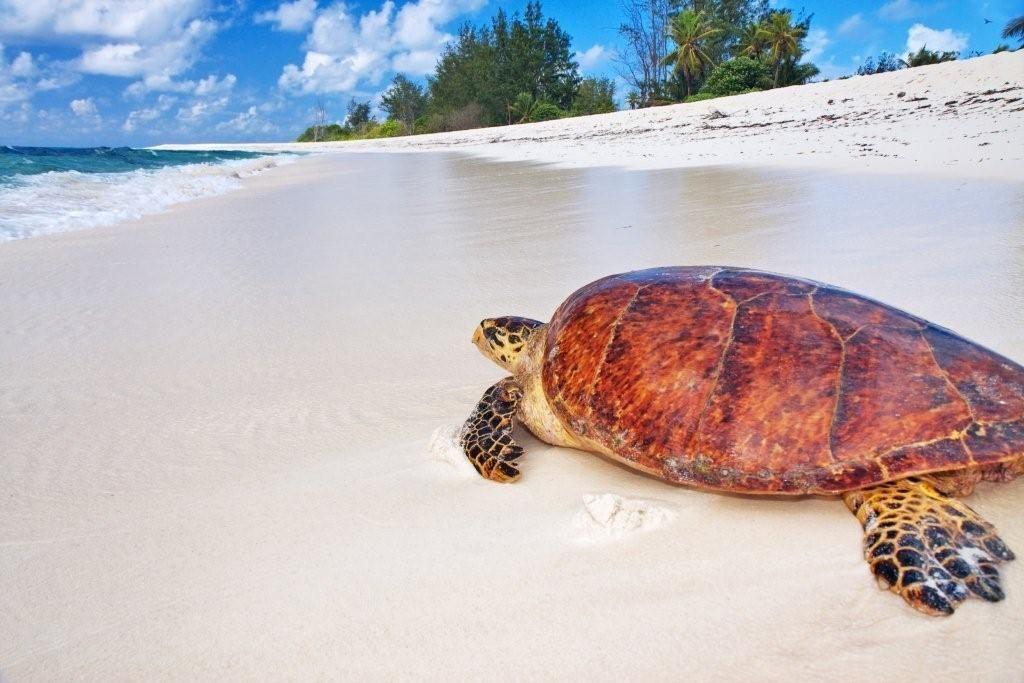 Seychelles Attitude tortue sur la plage