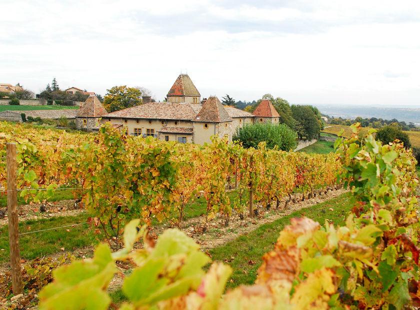 Château de la Gallée - Les vignes