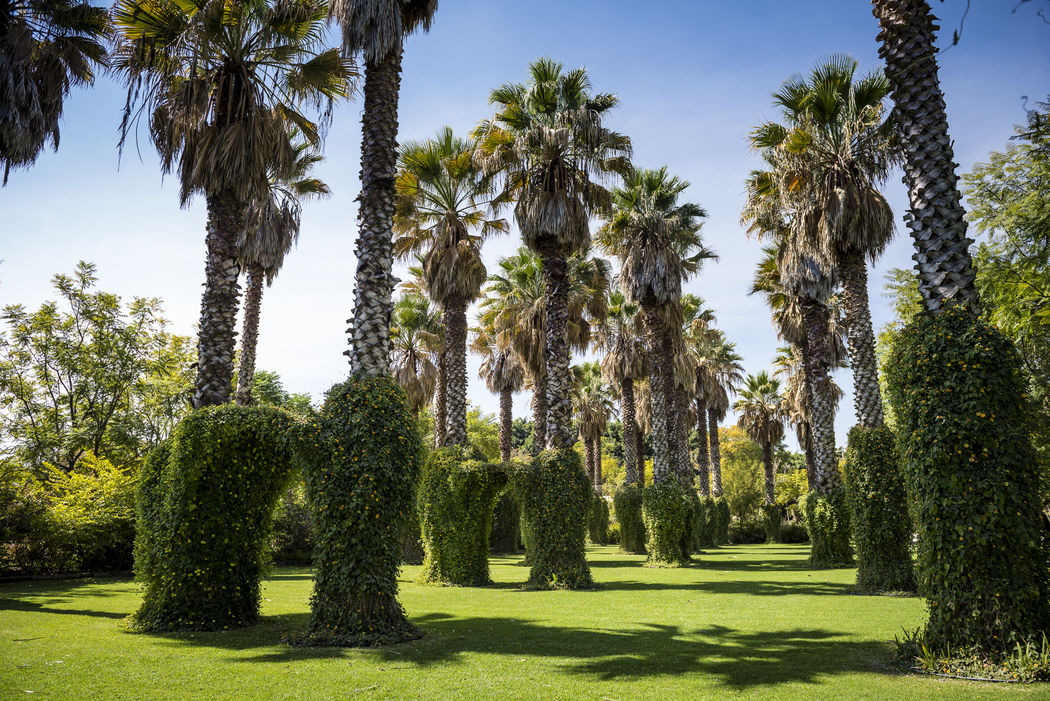 Área palmeras