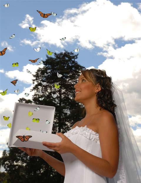 Imago en el Estado de México, para que liberes mariposas el día de tu boda