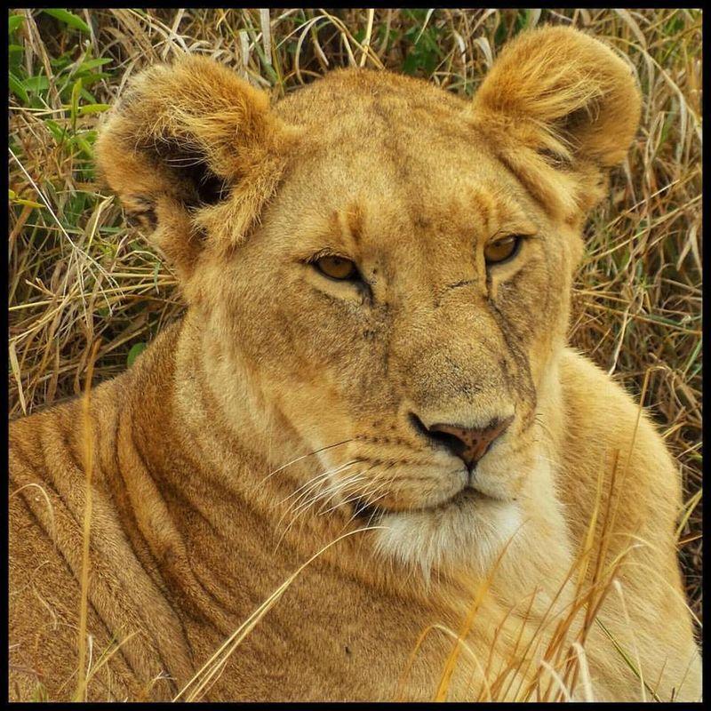 Serengeti National Park, Tanzania by @Rodrigo Garza - ®