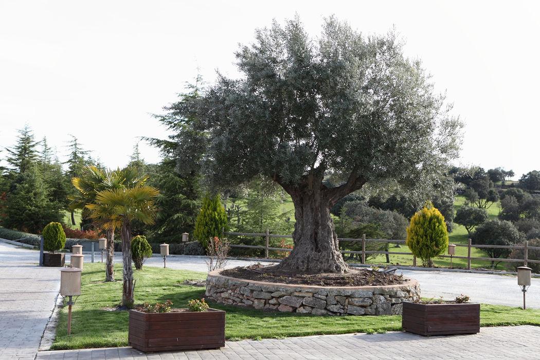 Valquijancho de Araceli