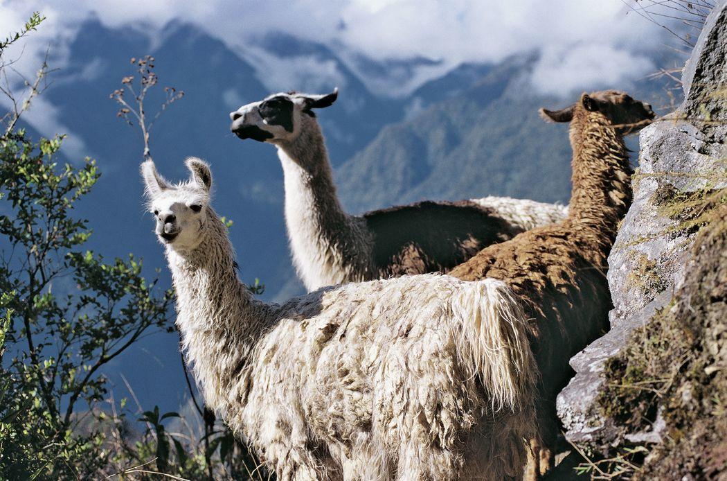 Découvrez le Pérou - ©PromPeru