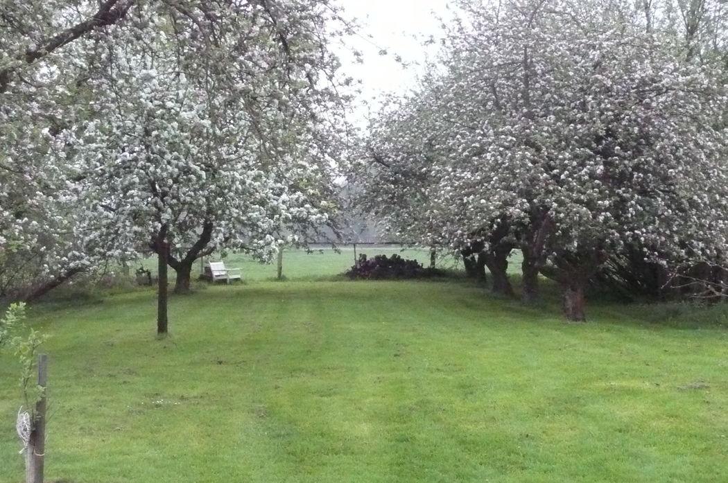 Alte Apfelplantage